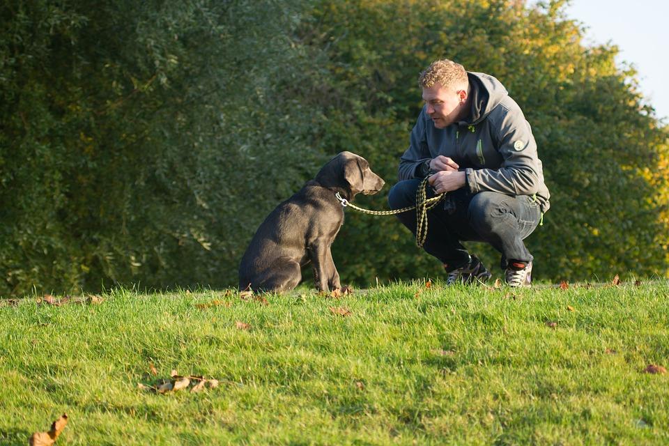 Guide: 3 ting du skal vide inden du køber en hundelem
